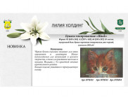 RR Бумага для графики Гознак 200гр  А4 ЧЕРНЫЙ