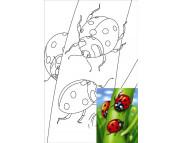 20х30 Холст на ДВП  ХЛОПОК, акрил.грунт, с рисунк.под раскраску Мультфильм №4 Божьи коровки